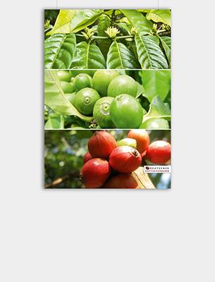 """Bild zu Poster: """"Anbau"""" - Von der Blüte zur Frucht"""